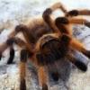 Аватар пользователя Рыжий паук